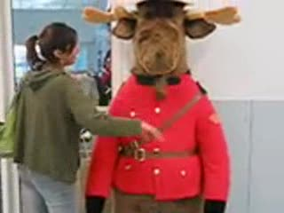 MedicineFilms.com - Canada Moose Waddle Whack