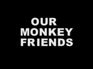 OUR MONKEY FRIENDS