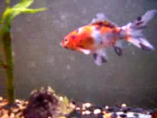 MedicineFilms.com - FishTank Time