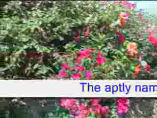 MedicineFilms.com - Jardines de Nerja apartment rental