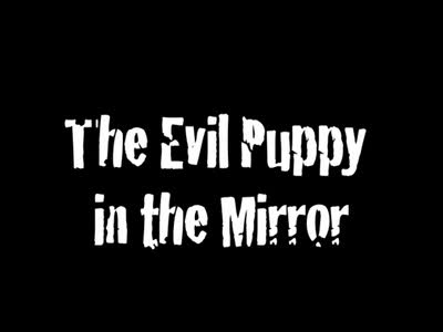 MedicineFilms.com - The Evil Puppy in the Mirror
