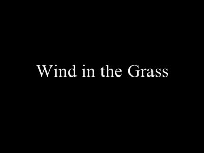 MedicineFilms.com - Wind in the grass