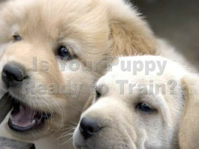 MedicineFilms.com - AKC puppy training and how to train your puppy to do tricks