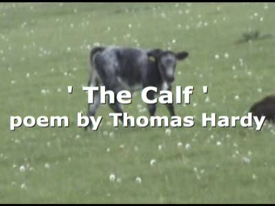MedicineFilms.com - The Calf -poem by Thomas Hardy