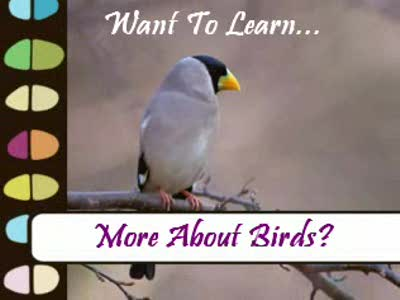 MedicineFilms.com - Attract Birds Through Bird Feeding To Your Garden